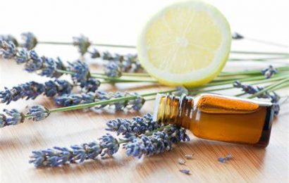 Applications of 4 Essential Oils in Aromatherapy