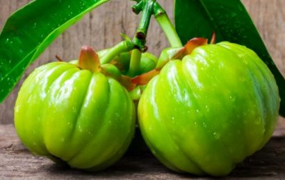 Benefits and Contraindications of Garcinia Cambogia