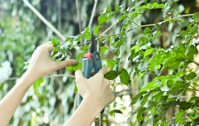 Professional Tips for Pruning Trees