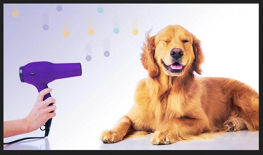 dog grooming HD