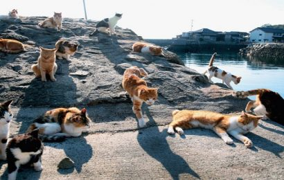 Why to Visit Cat Island for Vacations?