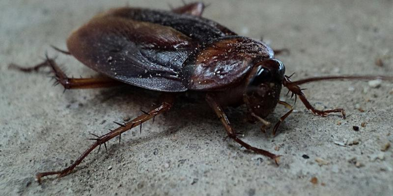 Effective Ways of Controlling Roaches