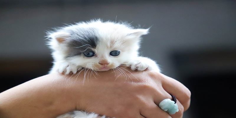 FIVE REASONS TO GO FOR A KITTEN PETTING